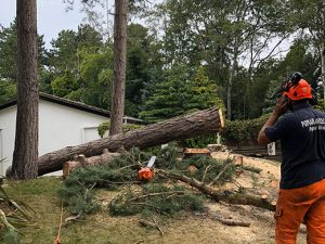 Tree Surgery and Home Insurance