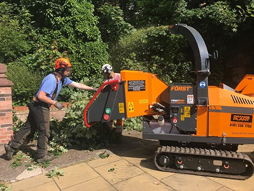 Tree Surgeon, Gardener or Arborist – What's the Difference?
