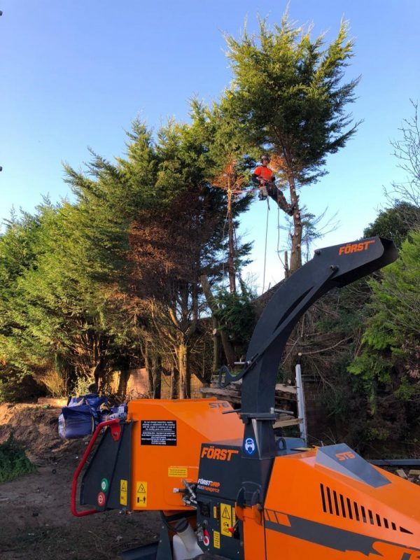 Commercial Tree Management
