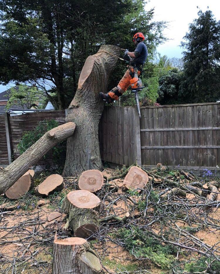 What should you expect from a tree surgeon?