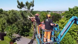 Liverpool Tree Surgeon – Poplar Tree Solutions: Book now for 20% off in February 2021